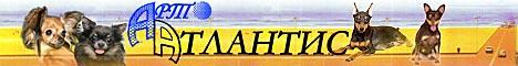 Арт-Атлантис - Цвергпинчер, русский той терьер, чихуахуа - Щенки продажа - Питомник Чемпионов